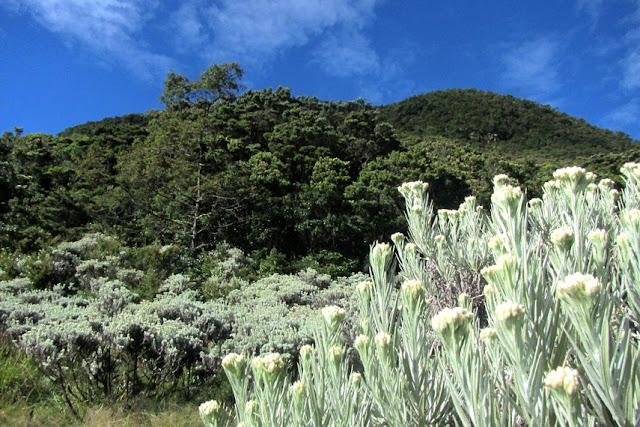 Exploring the Tropical Rainforests of Mount Gede Pangrango
