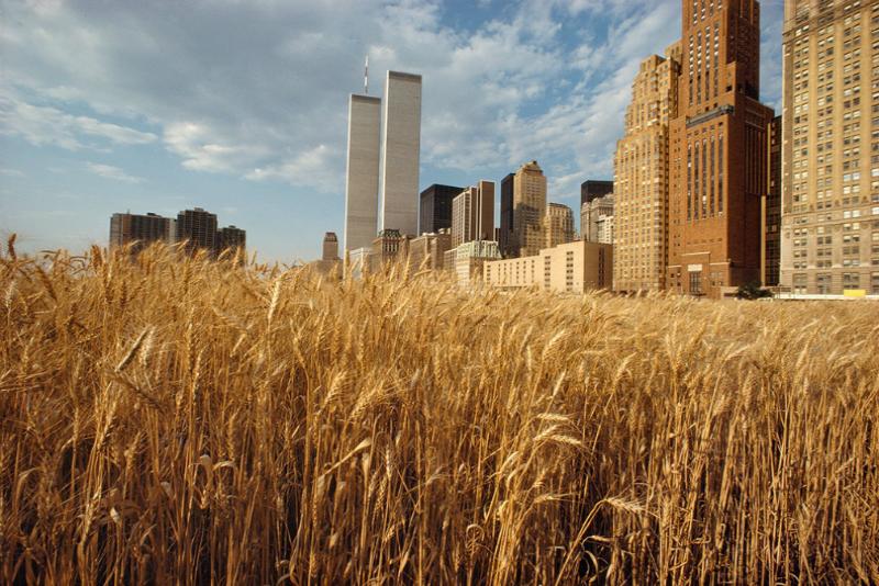 Trigo alto en Wheatfield 1982 delante del WTC
