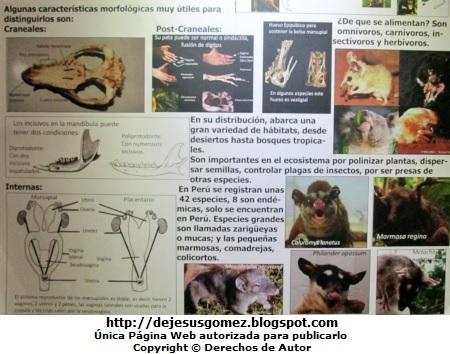 Foto a información en el Museo de Historia Natural por Jesus Gómez