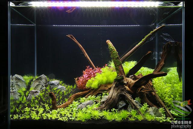 Water plants tank