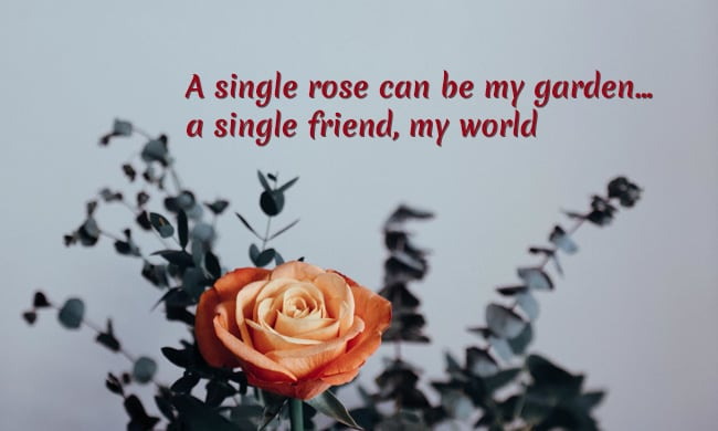 Rose day quotes, Theheartstatus.com