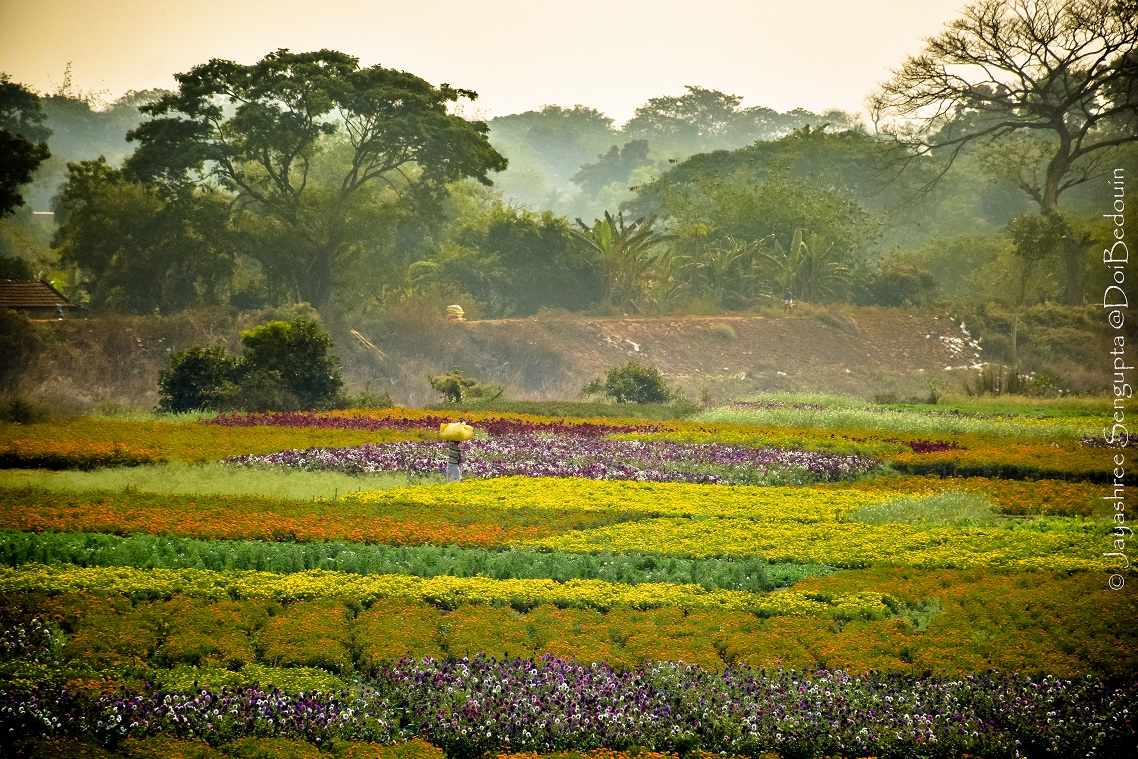 Location: Khirai, West Midnapore District, West Bengal, India. This village view beside the tracks of Howrah-Kharagpur connection blooms with the winter flowers of different colours making the same a delightful view.  @DoiBedouin