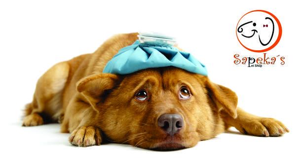Dor de barriga canina como cuidar
