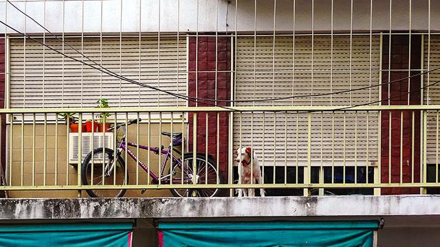 Una bicicleta y un perro tras las rejas en un balcón.