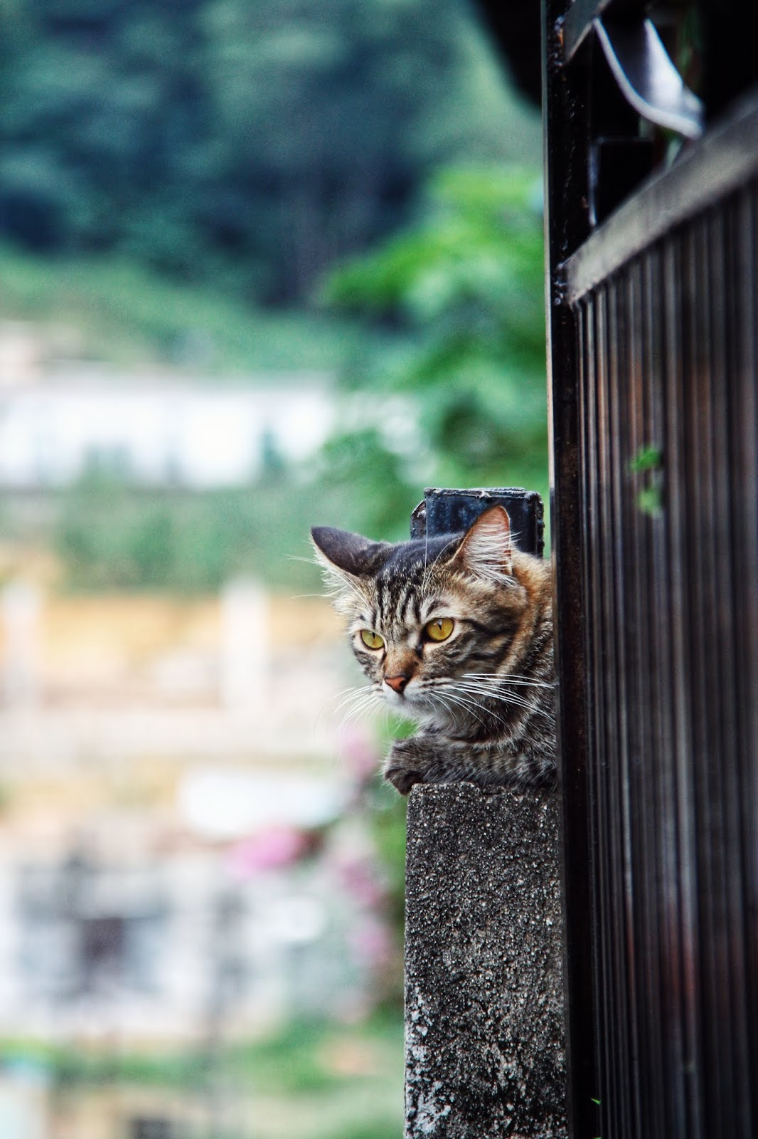 20 Koleksi Gambar Kucing Comel Bernama Tambi 9