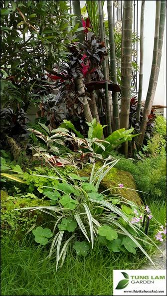 Thiết kế sân vườn đẹp, TungLam Garden, thi công sân vườn chuyên nghiệp