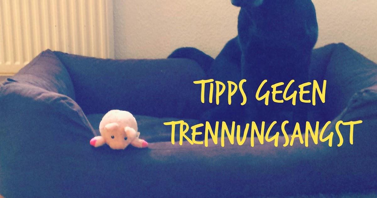 so lernt dein hund alleine zu hause zu bleiben tipps gegen trennungsangst hundeblog f r. Black Bedroom Furniture Sets. Home Design Ideas