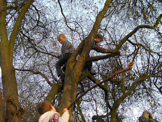 climbing prunus plum trees in park