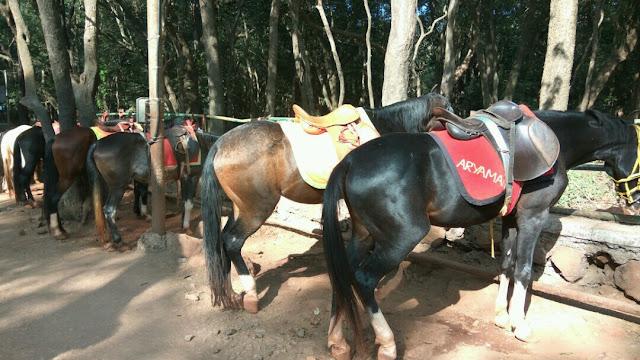 Horses at Dasturi