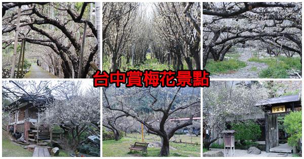台中賞梅花8處景點,除了南投以外的好選擇