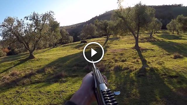 vidéo chasse aux sangliers 2017