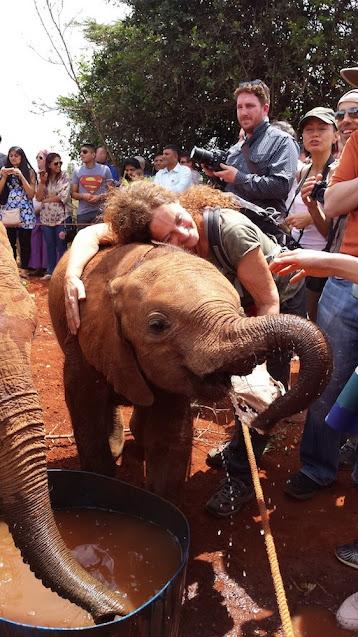 viaggio con elefanti