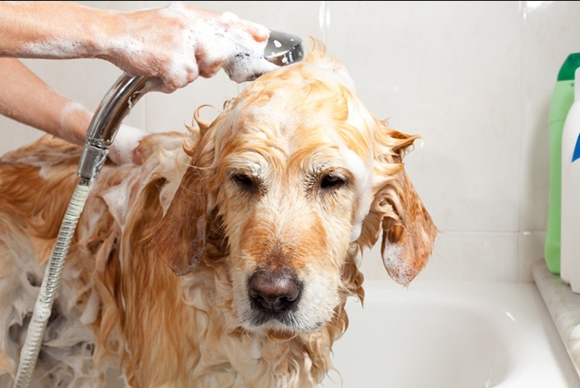 Tick Medicine For Dogs