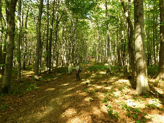 Zejście z Kamienia nad Jaśliskami w kierunku Przełęczy Beskid nad Czeremchą.