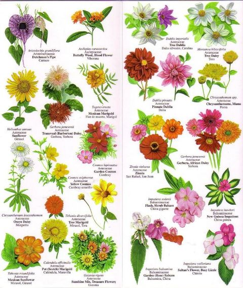 Different Types Of Flowers And Their Names Drawing