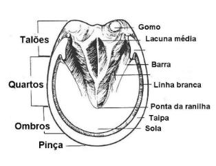 siderotecnia-ferrar-ferradura-cavalos-equinos-horse-apostila-pdf-vetarq-cabalos