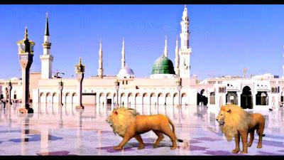 لماذا سوف تدخل الأسود المسجد النبوي في أخر الزمان ؟! تعرف علي الحقيقة