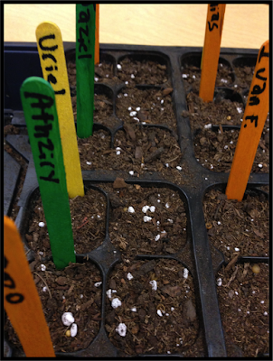All About plants and seeds.  Teach your students about how seeds grow and what plants need by planting seeds.  Use seed starter trays to make moving the plants indoors and outdoors easy, especially if your classroom doesn't have windows or sunlight.