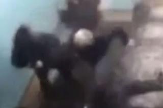 Pensioner beat up knife wielding gang in daring recue