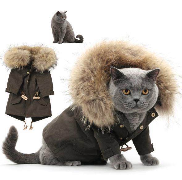 Fashion Cats   Cute Cats