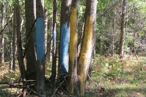 blue paint on trees
