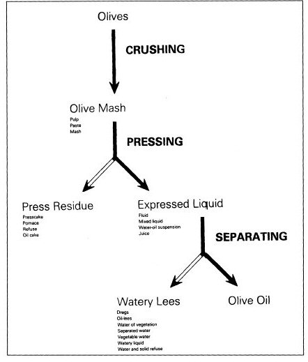 Flow Chart Showing The Process Of Olive Oil Extraction