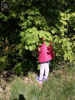 Dzielnicowy bieg na orientację