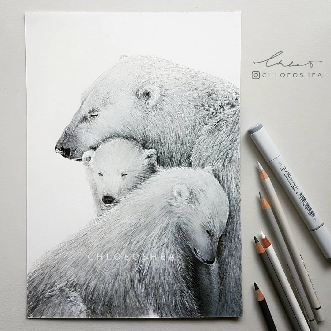 09-Polar-Bear-Chloe-O-Shea-Realistic-Wind-Animal-Drawings-www-designstack-co