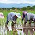 Jurusan Agribisnis dan Potensi Lulusan di Indonesia Bisa Kaya