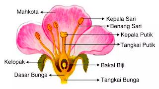 Bunga memiliki bagian-bagian, yaitu mahkota, kepala sari, benang sari, kepala putik, tangkai putik, bakal biji, tangkai, kelopak, dan dasar bunga.