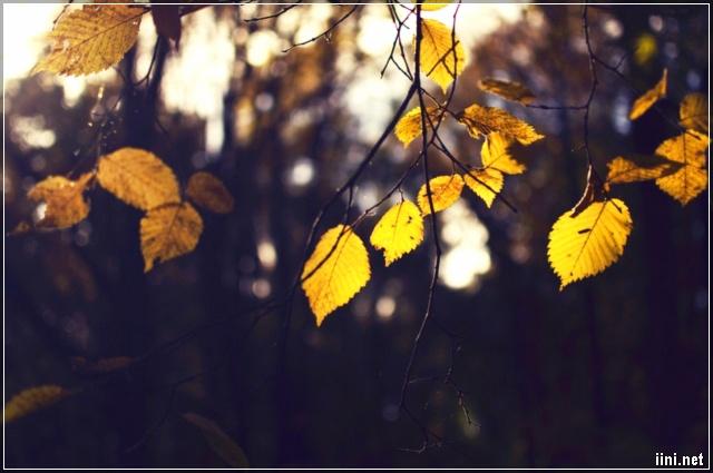 ảnh những chiếc lá vàng mùa thu đẹp