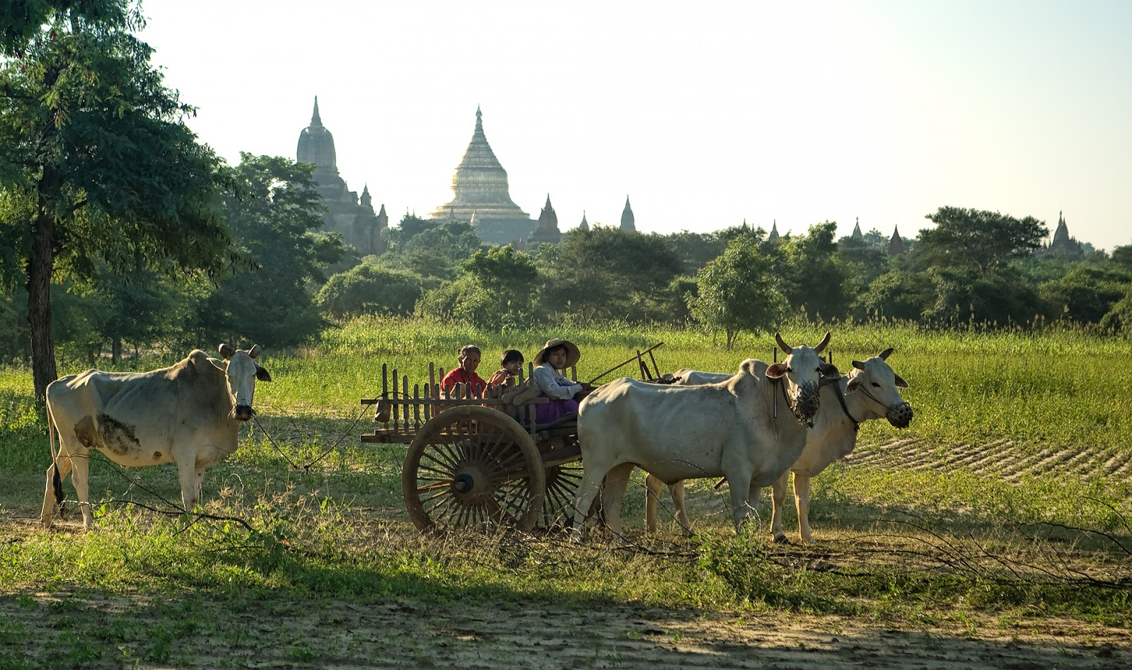 ludzie,bydło,kolaska,pagody,bagan,birma