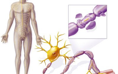 OcrevusOcrelizumab Cost, Side effects, Dosage, Uses for Multiple Sclerosis
