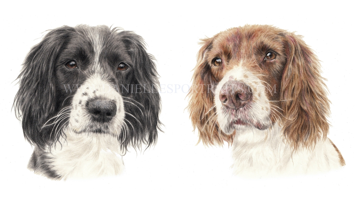 06-Tilly-and-May-Danielle-Fisher-Realistic-Pet-and-Wildlife-Portraits-www-designstack-co