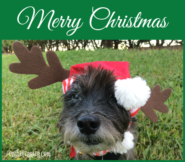 merry christmas from oz the terrier