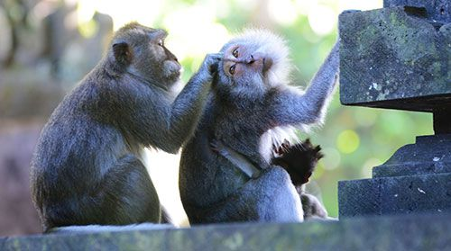 Alas Kedaton Monkey Forest - Bali Tanah Lot Temple Tour
