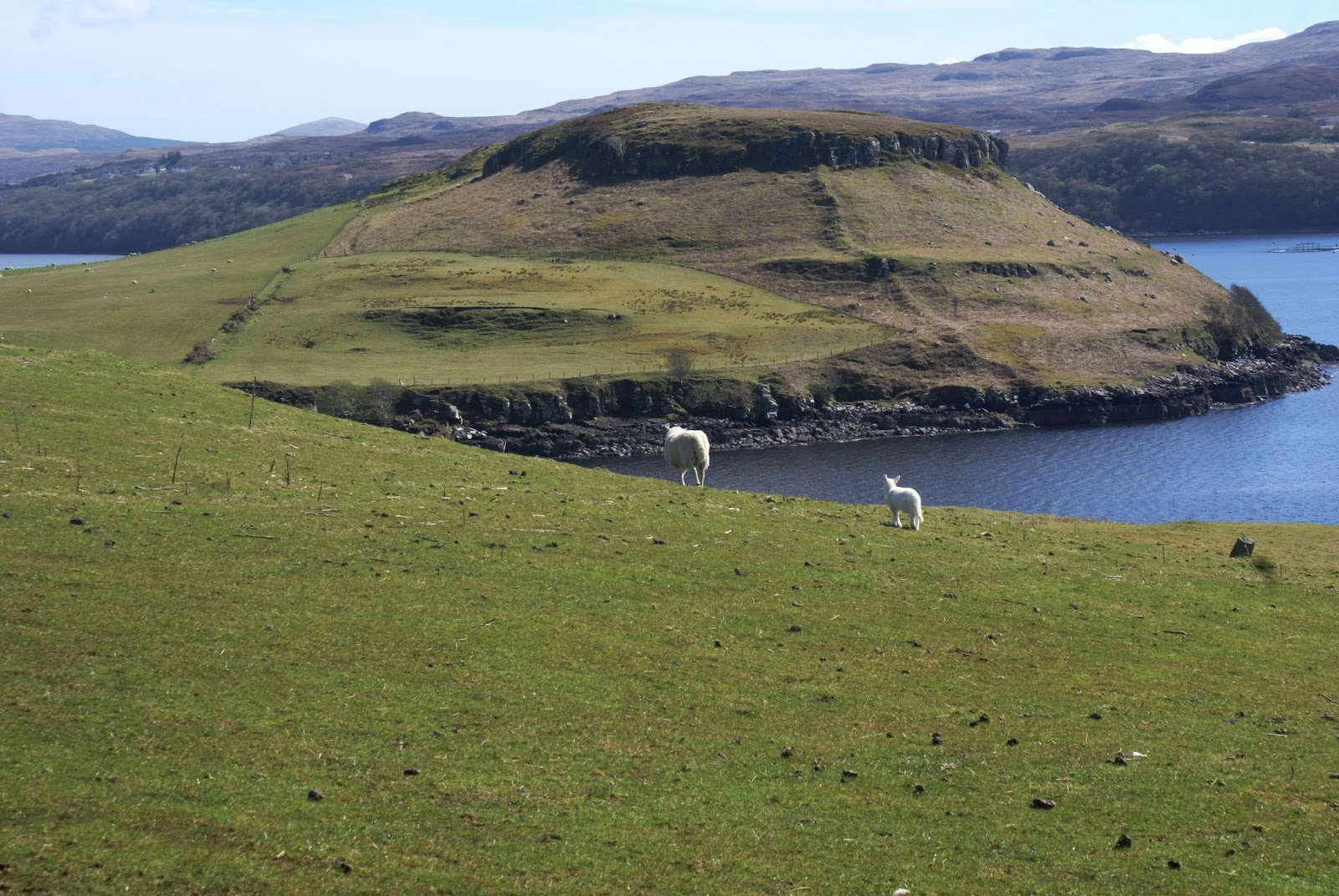 isle of skye scotland united kingdom sheep