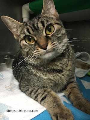 Gizmo the cat in the shelter
