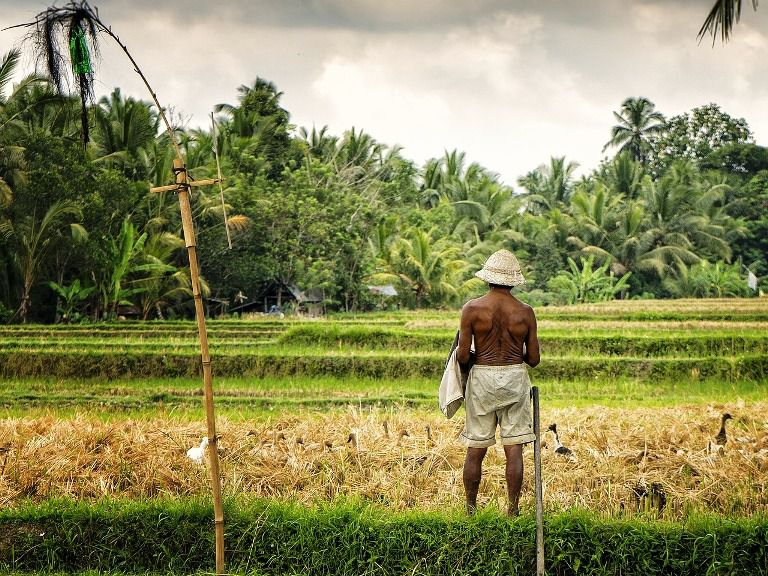 Singaraja Buleleng North Bali Countryside - Batubulan, Celuk, Mas, Ubud, Village, Bedulu, Kayuamba, Batur, Kintamani, Bali