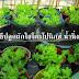 วิธีปลูกผักไฮโดรโปนิกส์ 🌱น้ํานิ่ง