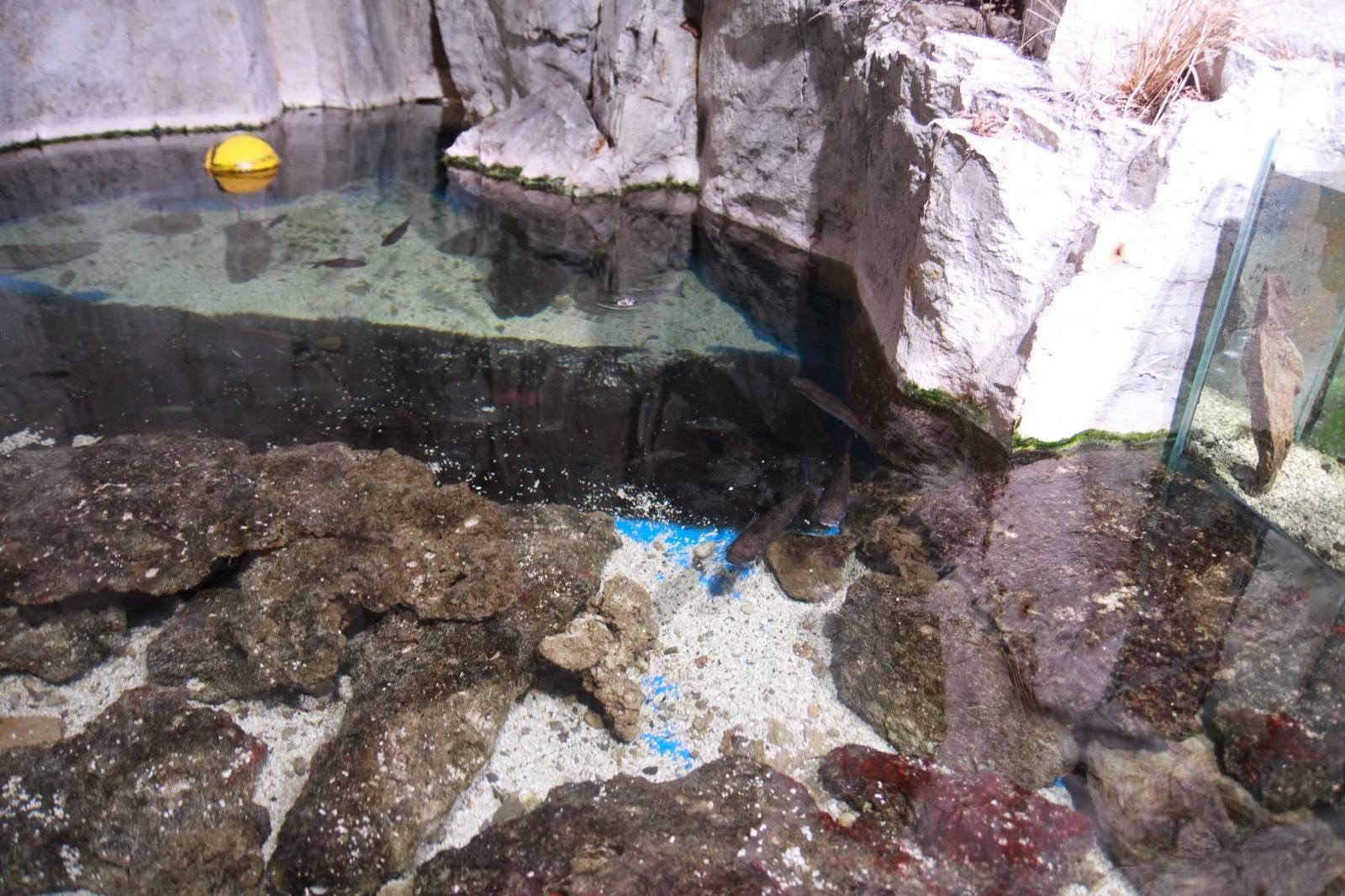 bassin tactile aquarium lyon