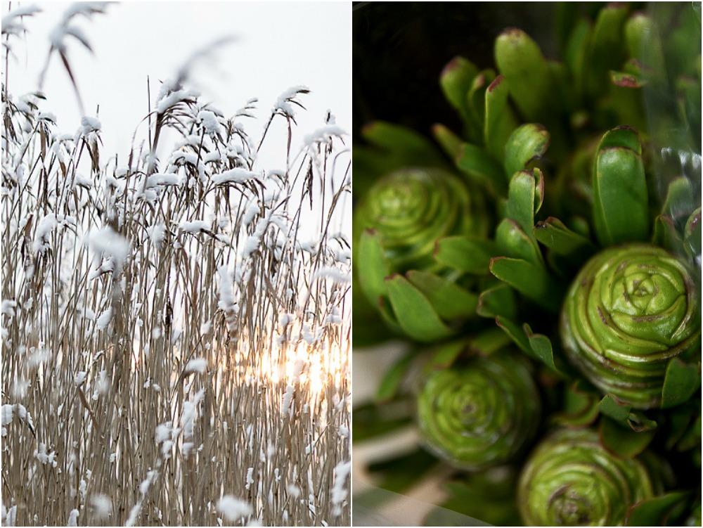 Huiskula, puutarha, Visualaddict, some-markkinointi, kurssi, Frida Steiner, valokuvaaja, valokuvaus, Turku, kukka, vihreä