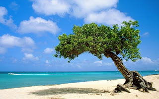 AMERICA: Aruba 16