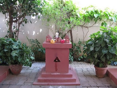 Tulsi Plant - Vibhu & Me