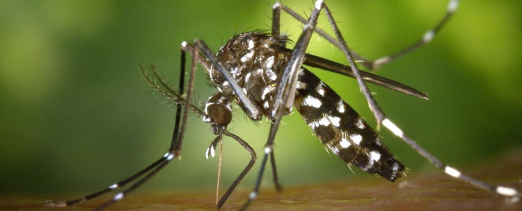Scientists Have Effectively Wiped Out Mosquitoes On Two Islands In Only Two Years