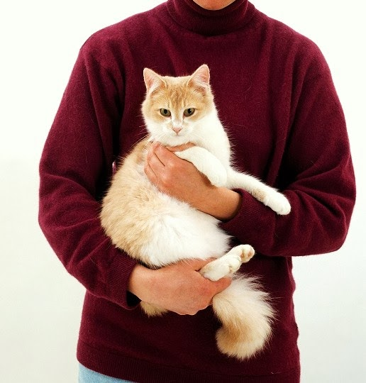 obat kucing muntah