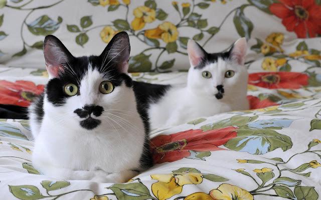 Twee katten op het bed