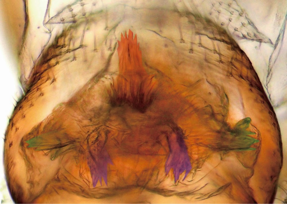 View Of Penis Inside Vagina