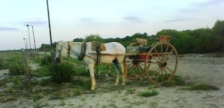 carro tirado a caballo