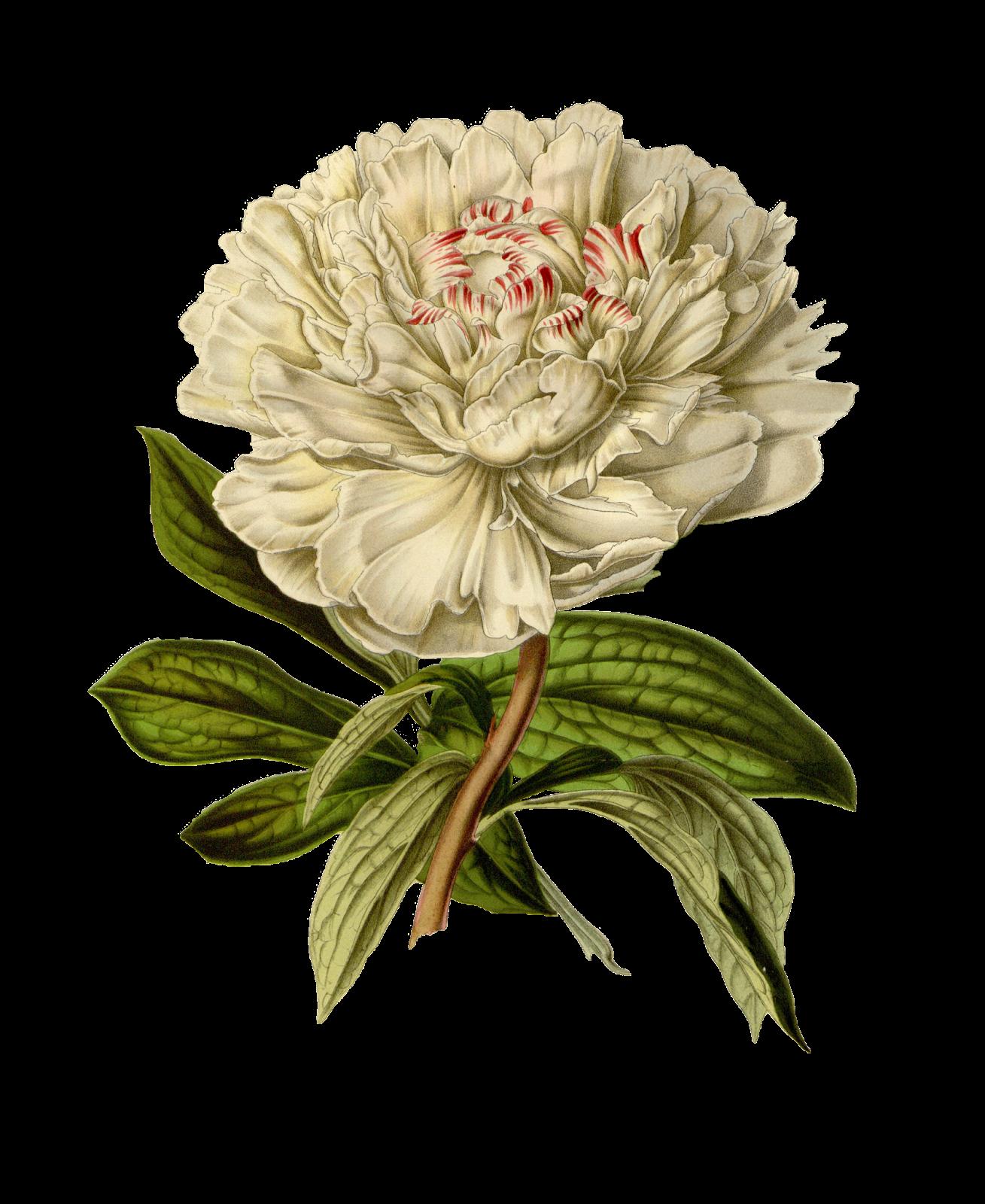 Блог Колибри: Vintage Floral PNG